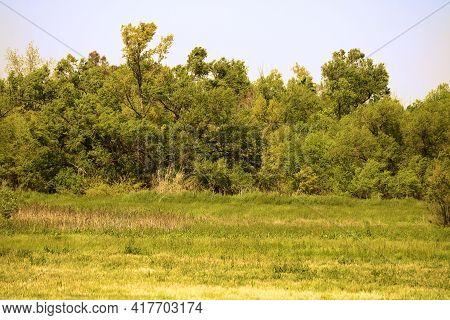 Lush Grasslands Besides A Deciduous Riparian Forest Taken At A Lush Prairie In The Rural North Ameri
