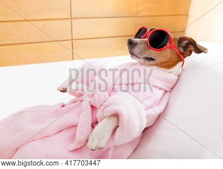 cool funny sausage dachshund dog resting and relaxing in spa wellness salon center ,wearing a pink b