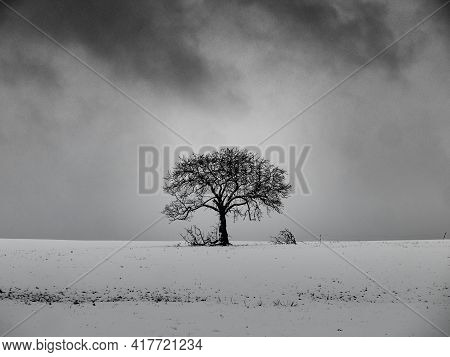 A Leafless Tree On A Snowy Hill With A Cloudy Sky In The Background In Black And White