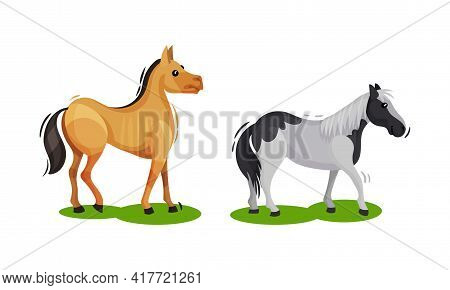 Horse With Crest Grazing On Green Field Vector Set
