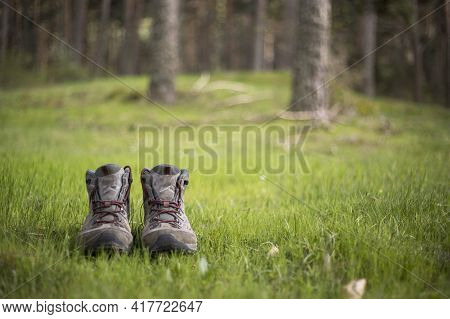 Hiking Boots In The Forest
