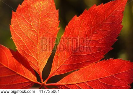 Beautiful Red Leaves Closeup In Autumn Unforgettable Landscape