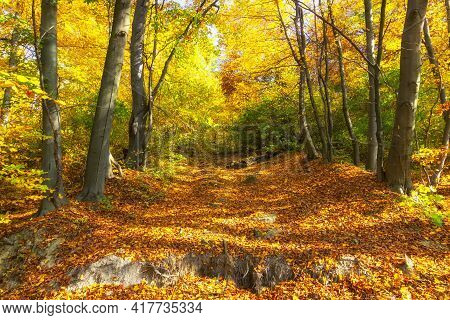Beautiful Autumn Forest And Yellow Trees Unforgettable Landscape