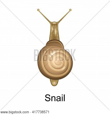 Beetle Snail Vector Icon.realistic Vector Icon Isolated On White Background Beetle Snail