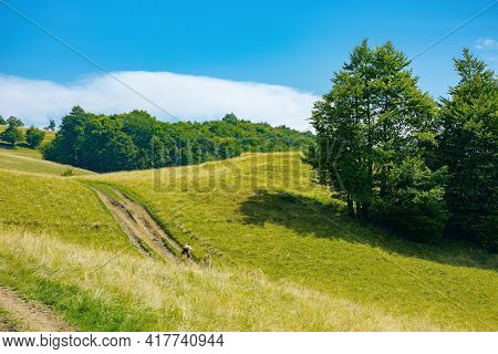 Mountain Landscape With Pasture On A Sunny Day. Beech Trees On The Hill. Beautiful Countryside Rural