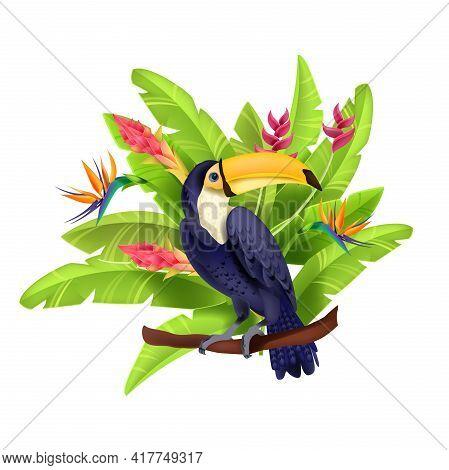 Toucan Vector Illustration, Exotic Tropical Bird, Banana Leaves, Paradise Flowers, Beak, Purple Feat