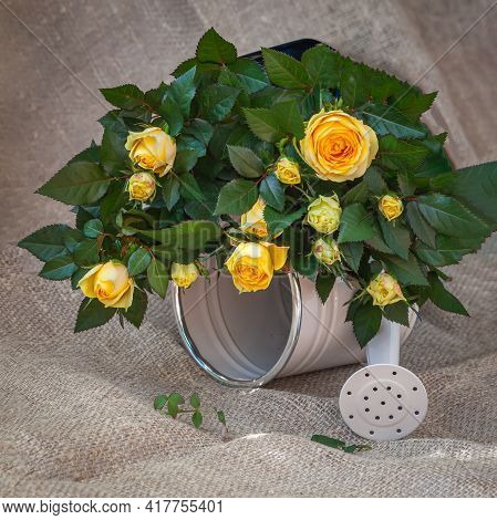 Fresh Vivid Bouquet Of Yelloow Roses On Decorative Watering Can On Background Of Sackcloth