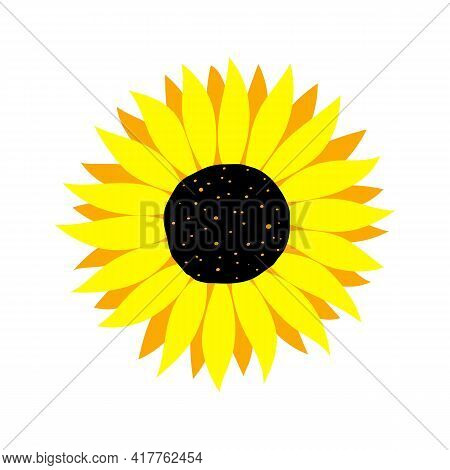 Vector Illustration Of Colorful Sunflower Isolated On White Background. Yellow Summer Flower Cutting