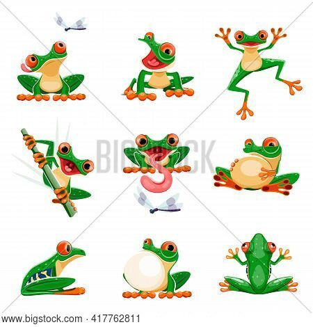 Funny Frogs In Various Poses. Amphibian Croaking, Jumping, Hunting, Catching Fly, Smiling. Exotic Tr