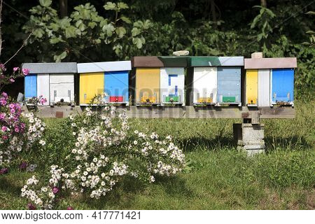 Sesto Calende (va), Italy - September 15, 2016: Detail Of Brand New Multicolored Wooden Beehive Boxe