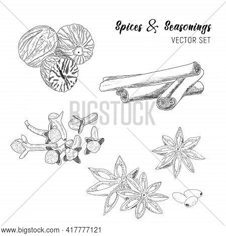 Vector Sketch Illustration In A Retro Style Spices And Flavoring.