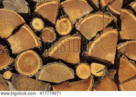 Dulzago (no), Italy - January 29, 2017: Firewood Used In The Feast Of The Patron Saint Julius To Bad