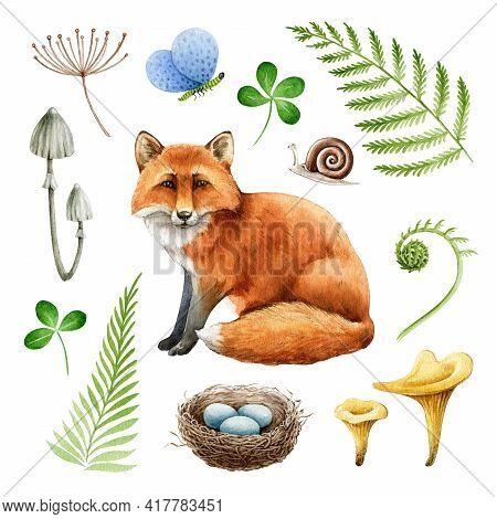 Red Fox Natural Forest Element Set. Watercolor Illustration. Woodland Wild Animal, Fern, Nest, Mushr