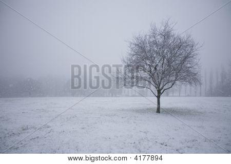 Snow Tree In Empty Field