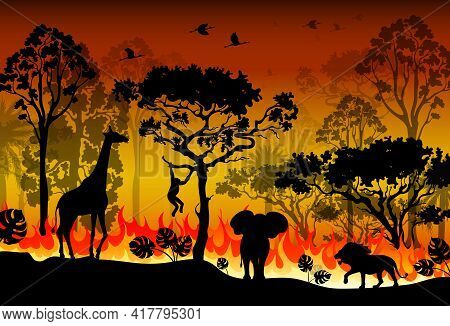 Problems Forest Fire Burns In Australia. Forest Fires With Silhouette Of Wild Animals. Burning Fores