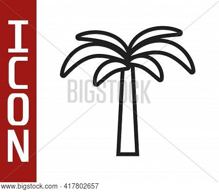 Black Line Tropical Palm Tree Icon Isolated On White Background. Coconut Palm Tree. Vector