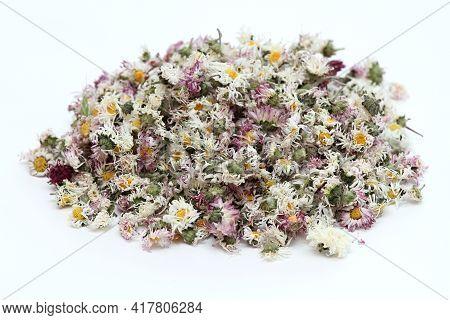 Dried Daisy Flowers,lat. Bellis Perennis, Also Bruisewort. Bellis Perennis Has Been Used In Herbal M