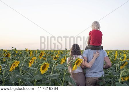 Mom, Dad And Son On Sunflower Field Back View. Child Sits On Dads Shoulders.