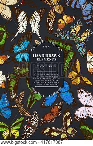 Card Design On Dark Background With Great Orange-tip, Emerald Swallowtail, Jungle Queens, Plain Tige