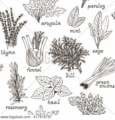 Culinary Herbs Seamless Pattern, Hand Drawn Set Of Herbs And Spices