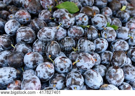 Full Frame Image Of A Large Group Of Fresh Organic Plums Ready For Sale On A Local Farmers Market