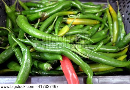Still Life With Lot Of Long Ripe Green Chili Peppers Inside Black Plastic Box In The Vegetable Depar