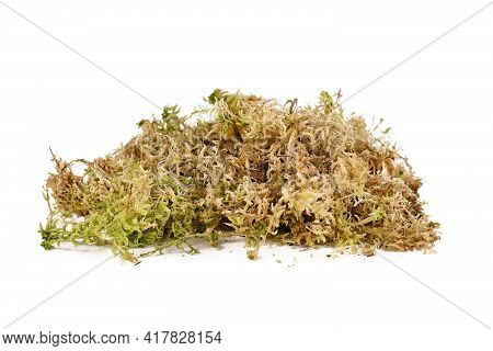 Sphagnum Moss Used For Plant Propagation, Orchid Spoil Or Terrariums Isolated On White Background. A