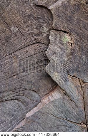 Tree Rings Inside A Cut Tree Trunk. The Trunk Has Been Cut Some Time Ago And There Is A Large Cut Ac
