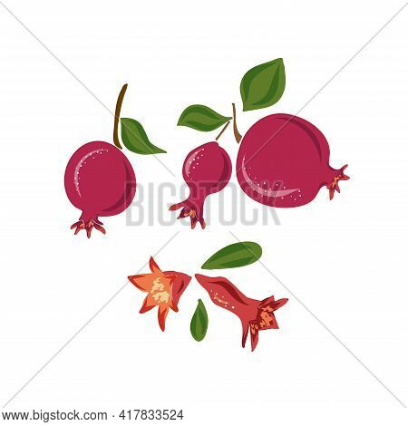 Red Ripe Pomegranate And Tropical Leaves Vector Illustration On Pink Background. Hand Drawn Sketch S