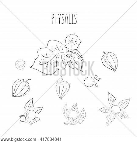 Big Set Superfoods. Vector Illustration Physalis, Berries. Hand Drawing Flowers, Leaves, Small Tomat