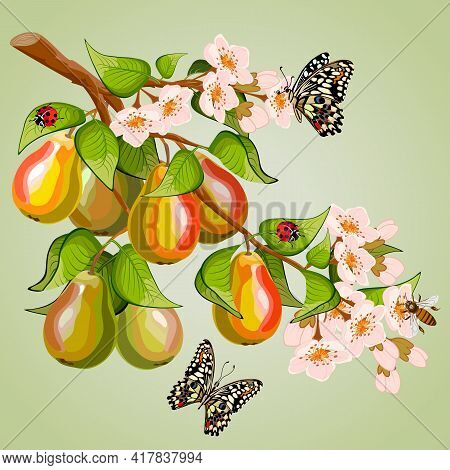 Branch With Pears In The Illustration.colored Vector Illustration With A Branch Of Pears And Butterf
