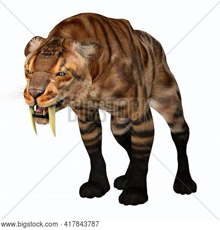 Smilodon Cat Snarl 3d Illustration - The Saber-tooth Tiger Was A Predatory Cat That Lived In North A