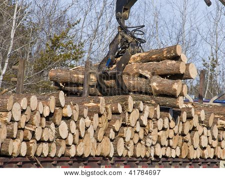 Loading a logging Truck