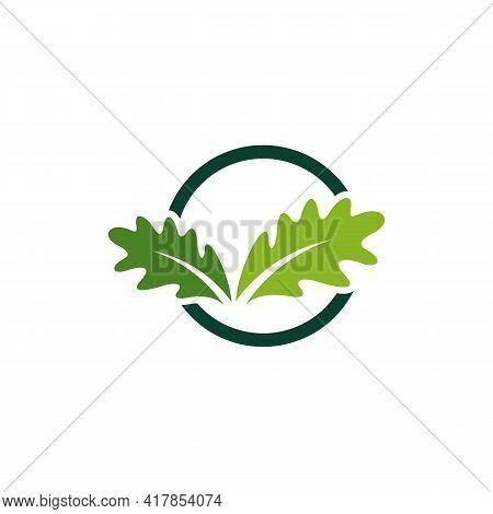 Oak Leaf Logo Design Vector Illustration, Creative Oak Tree Logo Design Concept Template, Symbols Ic