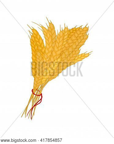 Bunch Of Wheat. Reap Of Spiked Grain Heads. Sheaf Of Crop Ears. Illustration