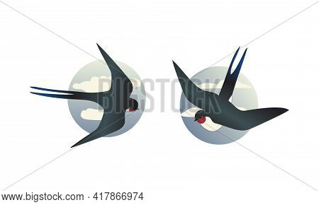 Swallow Or Martin As Passerine Bird With Long Pointed Wings Vector Set