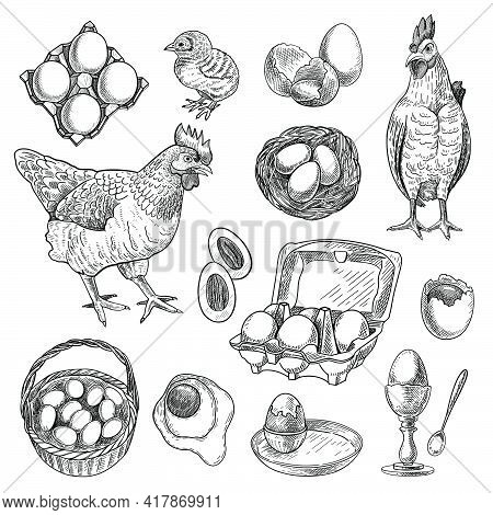 Chicken Farm Products Sketches Set. Hand Drawn Nest, Hen, Rooster, Basket With Eggs. Engraved Vector
