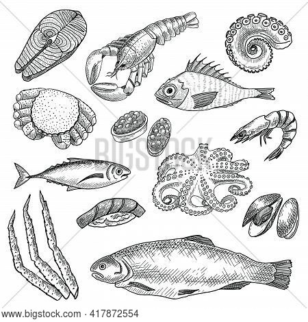 Seafood Sketches Set. Hand Drawn Octopus, Lobster, Prawn, Salmon, Oyster, Tuna. Engraved Vector Illu