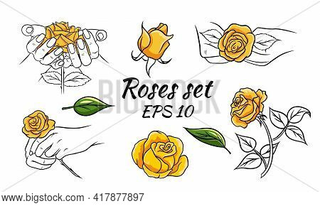 Set Of Patterns With Roses. Roses In Hands, Buds, Leaves. Yellow Roses. Vector Illustration Isolated