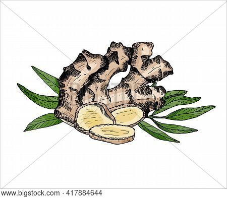 Ginger Vegetable Arrangement. Colored Vector Illustration With Pile Of Ginger Root, Leaves And Slice