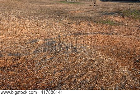 Mulch Bark From Pieces Of Wood Chips To Prevent Weed Growth And Weed Germination. Branch Crusher, Cl