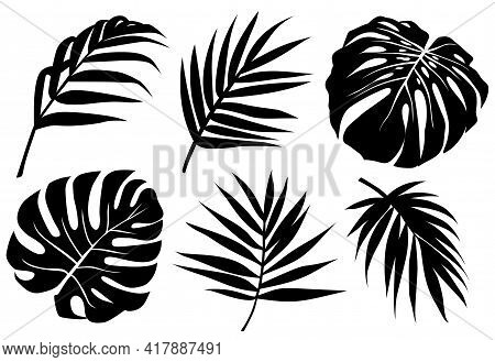 Vector Tropic Leaves Black Silhouette. Jungle Plant, Monstera Leaf, Palm Frond. Abstract Exotic Set