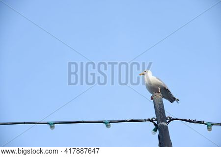 Seagull Perched On A Post At The End Of A Beach Pier With Blue Sky Background