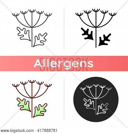 Queen Annes Lace Icon. Blooming Wildflower. Wild Carrot Flower. Allergic Reaction. Pollen Allergen.
