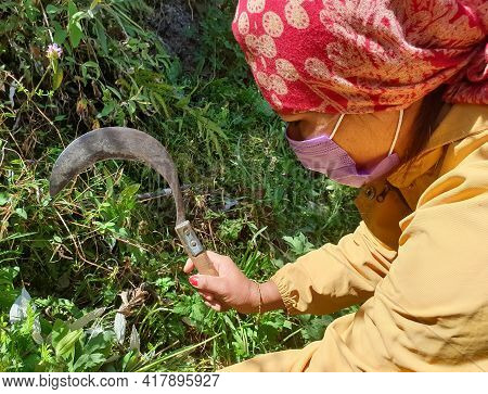 Concept Of Authentic Living, A Asian Young Woman Cutting Grass With Sickle With Wearing Face Mask