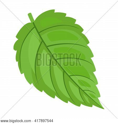 Mint Leaf Cartoon Vector Icon.cartoon Vector Illustration Fresh Peppermint. Isolated Illustration Of