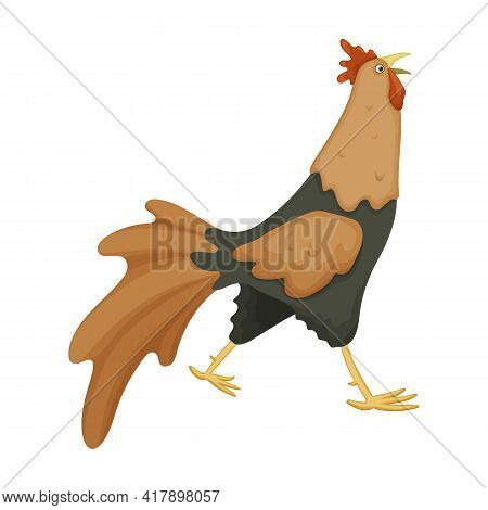 Cock Of Animal Cartoon Vector Icon.cartoon Vector Illustration Rooster. Isolated Illustration Of Coc
