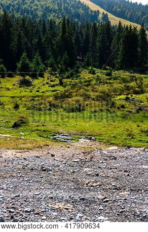 Green Mountain Forest Landscape. Beautiful Nature With Alpine Meadows  In Bihor, Romania.