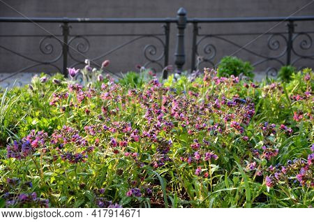 Bench By The Retaining Wall In The Park In Early Spring Flowering Perennials On A High Wall. Paths O