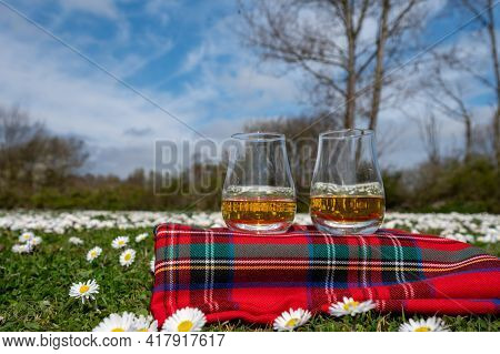 Glasses Of Scotch Single Malt Or Blended Whisky On Red Tartan On Green Grass With Many White Daisy F